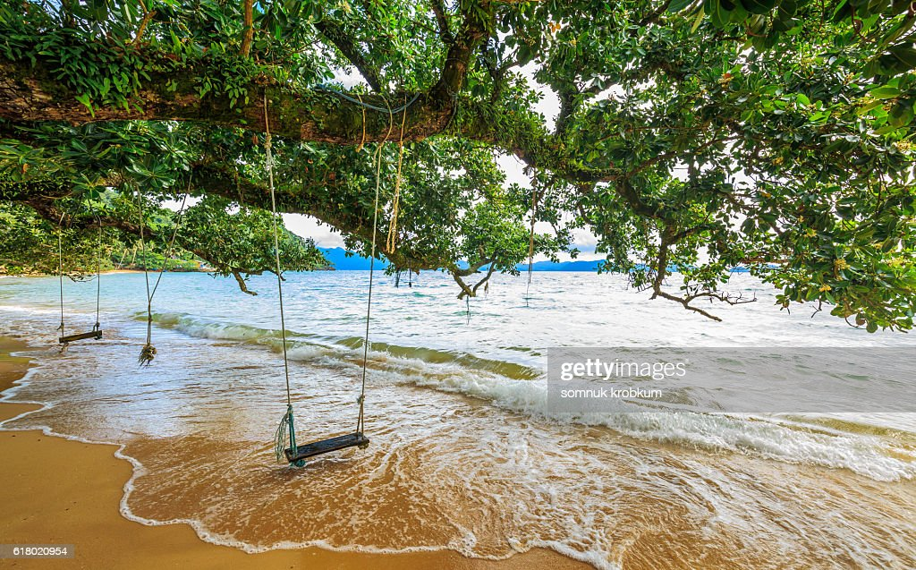 Hanging swing and large old tree on beach : Stock-Foto