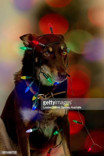 Hanging the christmas lights