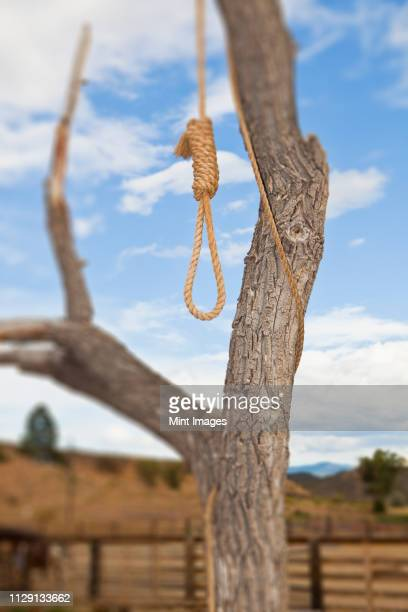 hangman noose in a tree - lynching stock pictures, royalty-free photos & images