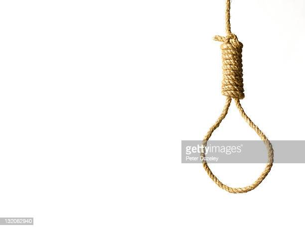 hangman's noose on white background and copy space - death photos stock photos and pictures