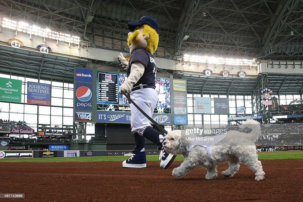 Hank the Dog and Bernie Brewers run the field before the game between the Atlanta Braves during Opening Day at Miller Park on March 31, 2014 in Milwaukee, Wisconsin.