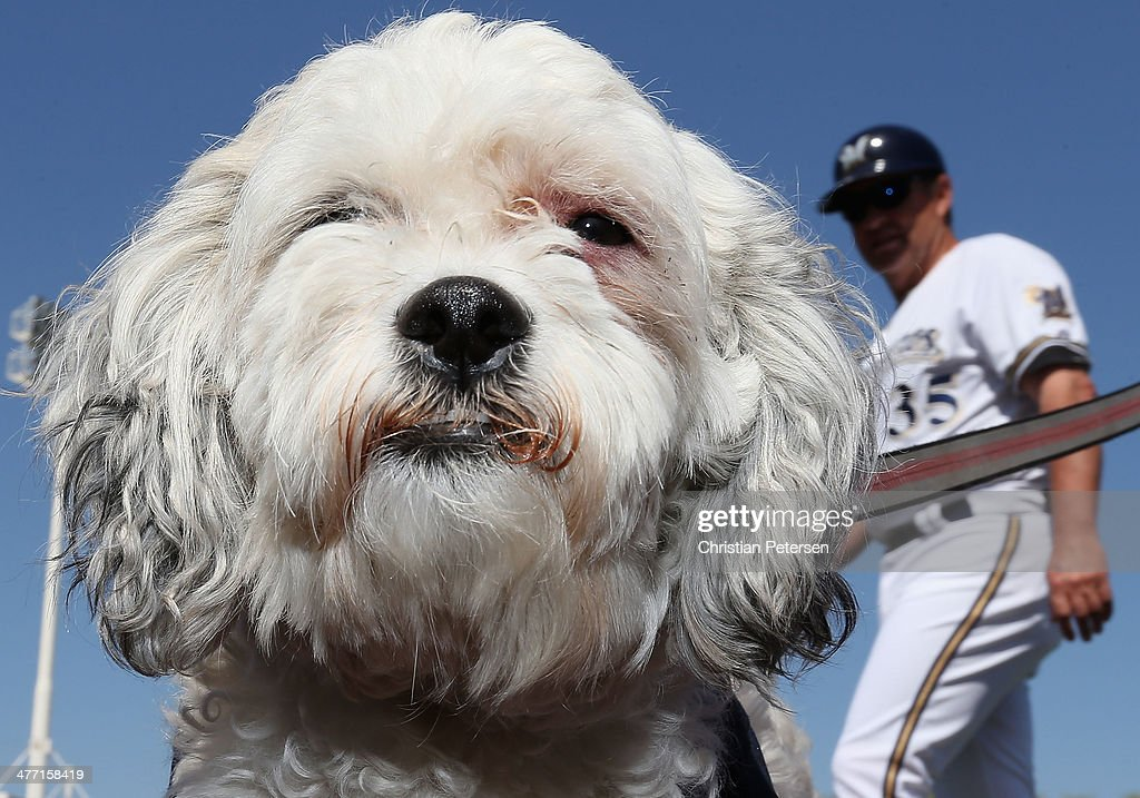 'Hank the dog' sits on the field before the spring training game between the Milwaukee Brewers and the San Diego Padres at Maryvale Baseball Park on March 7, 2014 in Phoenix, Arizona.