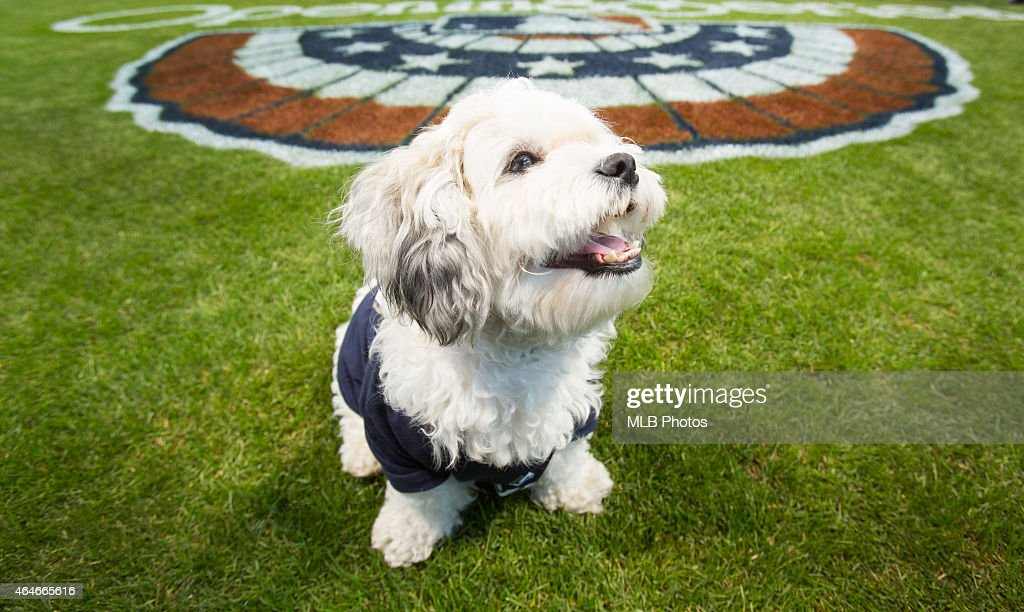 Hank the Dog, who was rescued by the Milwaukee Brewers when he wandered into their spring training facility before the start of the 2014 season is seen on the field at Miller Park on Sunday, March 30, 2014 in Milwaukee, Wisconsin.