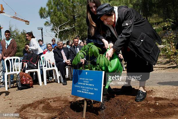 Hanna Pick a Holocaust survivor and a friend of Anne Frank and her granddaughter Tamar Meir water a sapling from the chestnut tree that Anne Frank...