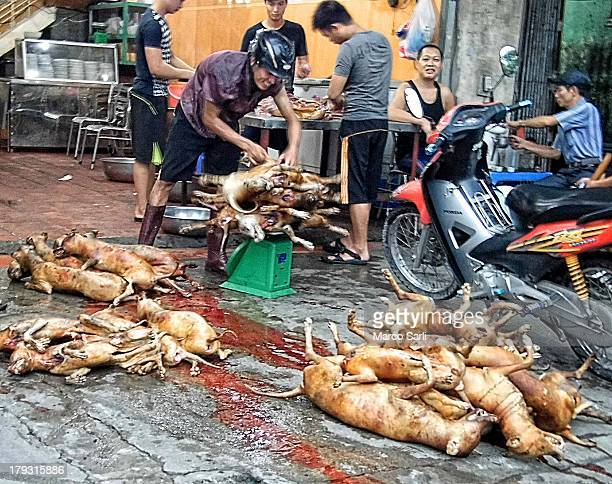 Hanoi Vietnam Dog meat restaurant at 6 am preparing dogs.