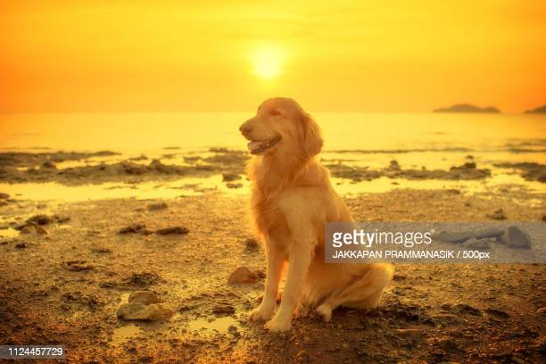 Happiness Dog With Sunset