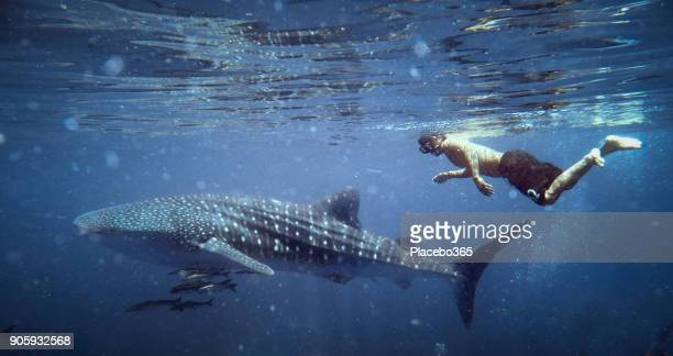 Happiness in Nature: Man enjoying nature swimming with an Endangered Species Pelagic Whale Shark (Rhincodon types)