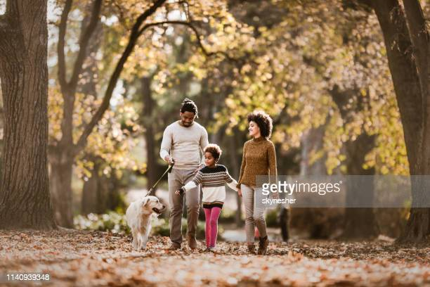happy african american family taking their dog for an autumn walk. - outdoors stock pictures, royalty-free photos & images