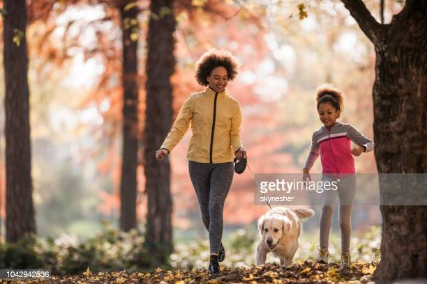 happy african american mother and daughter running with golden retriever in the park. - autumn dog stock pictures, royalty-free photos & images