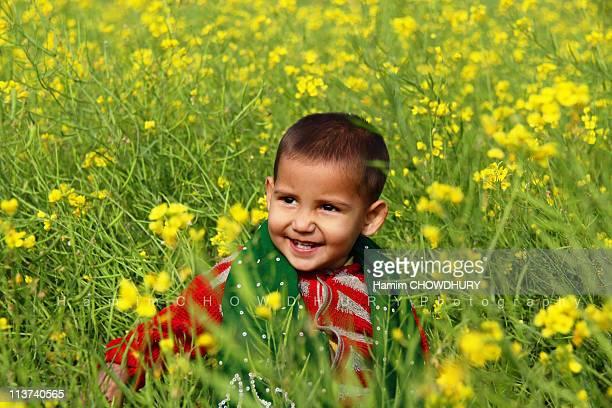 happy bangladesh - bangladeshi flowers stock pictures, royalty-free photos & images