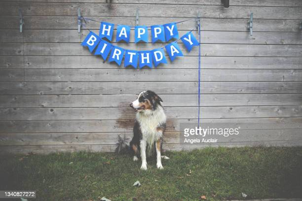 happy birthday dog - angela auclair stock pictures, royalty-free photos & images