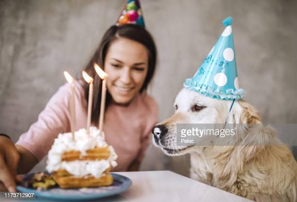 Brilliant Dog Eating Cake Stock Pictures Royalty Free Photos Images Personalised Birthday Cards Akebfashionlily Jamesorg