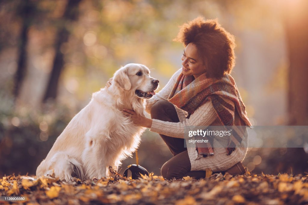Happy black woman spending an autumn day with her retriever in nature. : Stock Photo