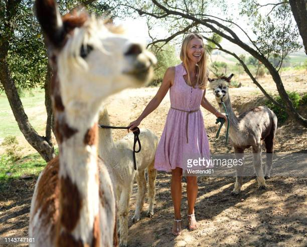 happy blond woman with alpacas - camel active stock-fotos und bilder
