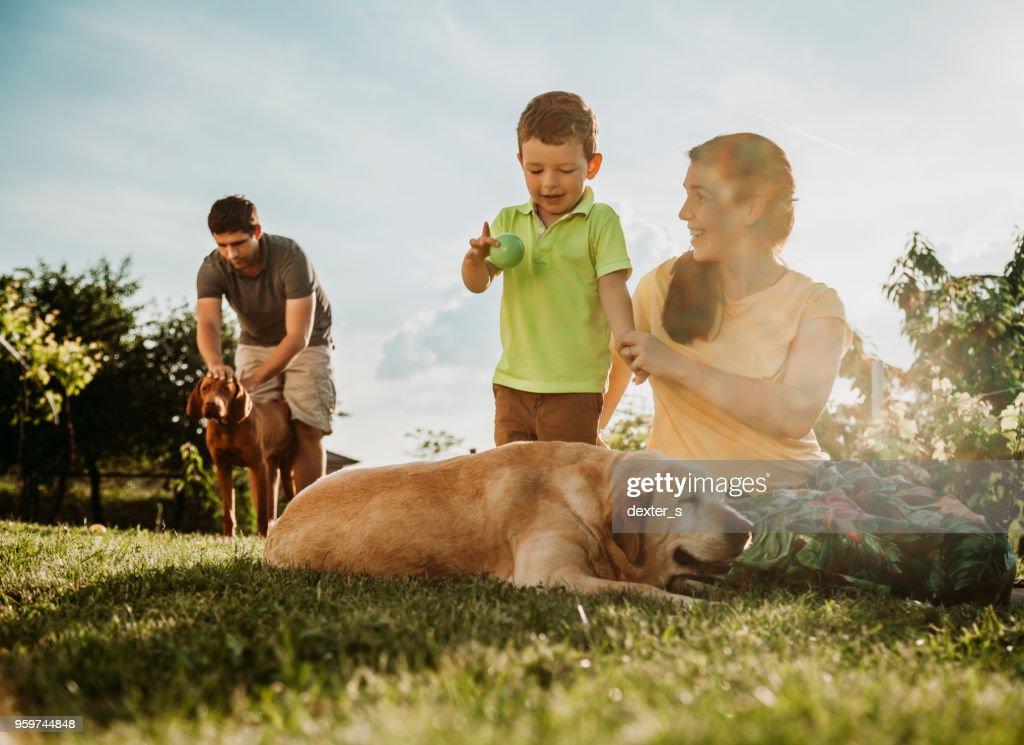 Fröhlicher junge und Eltern mit Hunden : Stock-Foto