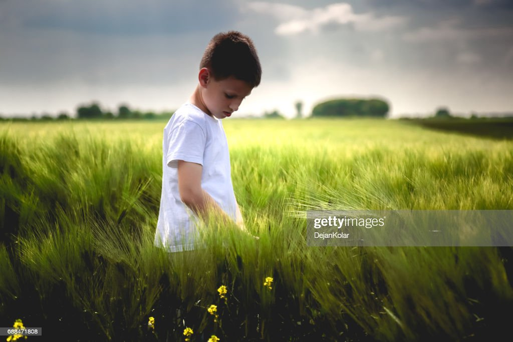 Happy child exploring green wheat field : Stock Photo