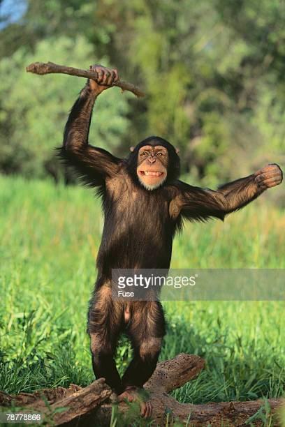 Happy Chimpanzee