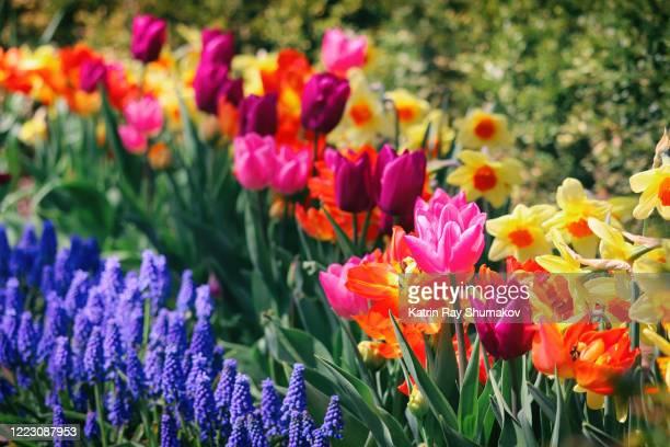 happy colours of blooming spring - bloemhoofd stockfoto's en -beelden