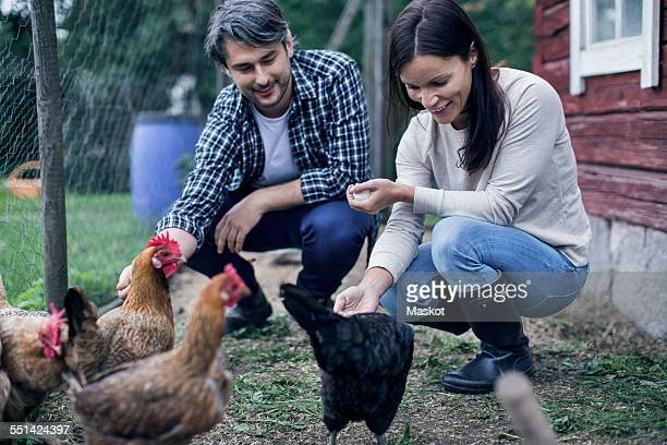 Happy couple feeding hens at poultry farm
