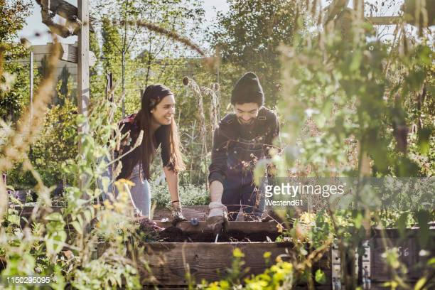 happy couple gardening in urban garden together - urban garden stock pictures, royalty-free photos & images