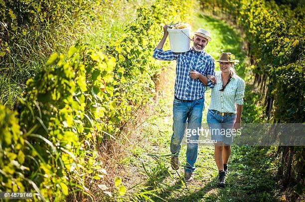 Happy Couple Harvesting Grapes