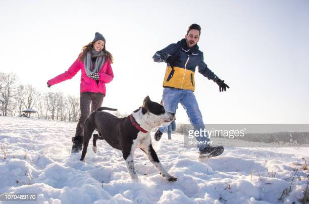 happy couple having fun while running with their dog on snow. - canine stock pictures, royalty-free photos & images