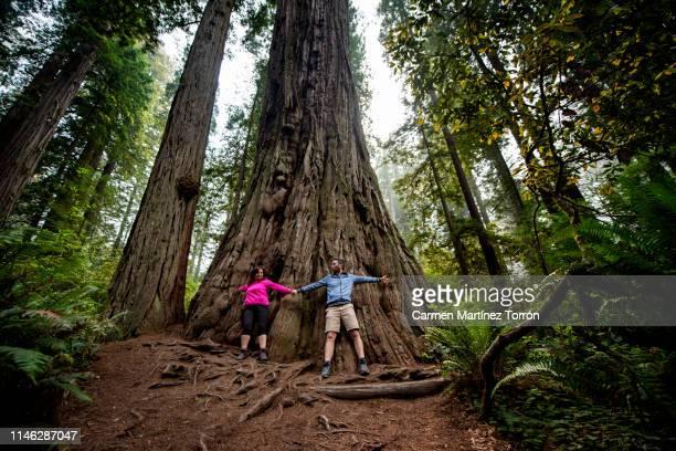 happy couple in redwoods national park, usa. - carmen bella foto e immagini stock