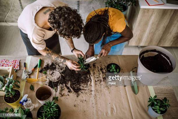 happy couple planting the houseplants - potting stock pictures, royalty-free photos & images