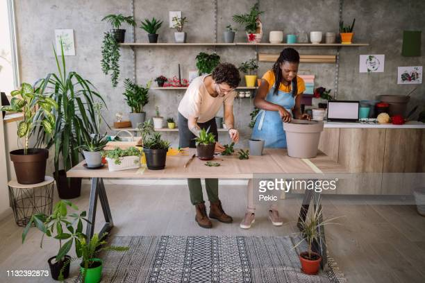 happy couple planting the houseplants - botanist stock pictures, royalty-free photos & images
