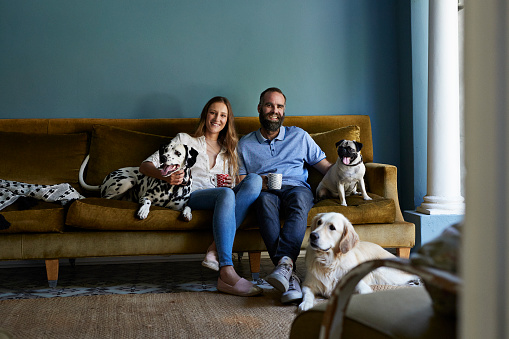 Happy couple sitting in sofa with their 3 dogs - gettyimageskorea