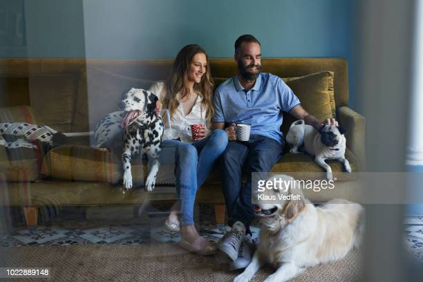 happy couple sitting in sofa with their 3 dogs - 30 39 anos imagens e fotografias de stock