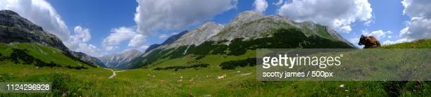happy cows - karwendel mountains stock pictures, royalty-free photos & images