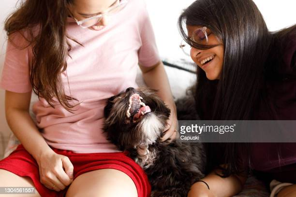 happy dog being petted lying between two young women - between stock pictures, royalty-free photos & images