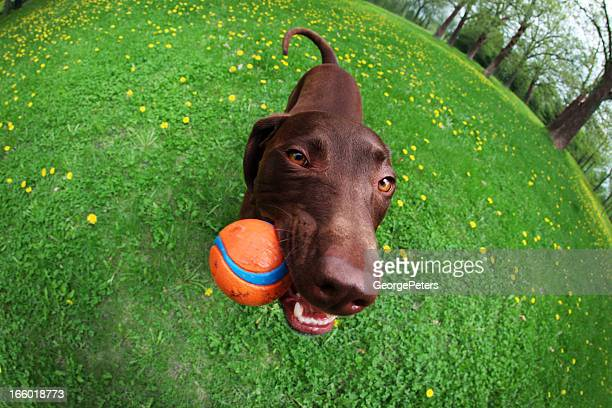Chien heureux Chewing-Ball