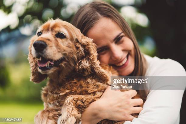 happy dog cuddling with his owner - cocker spaniel stock pictures, royalty-free photos & images