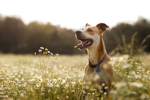 Happy dog in the fields 864462902