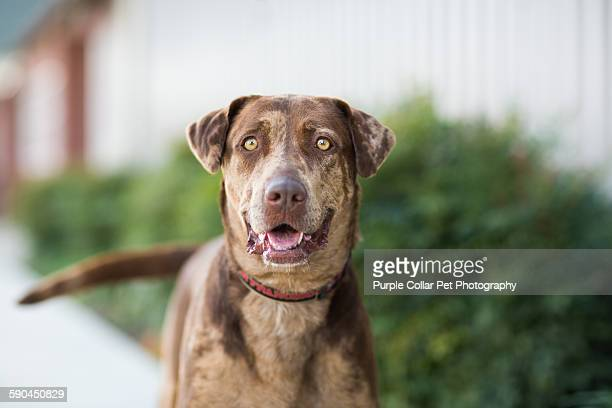 happy dog outdoors - mixed breed dog stock pictures, royalty-free photos & images