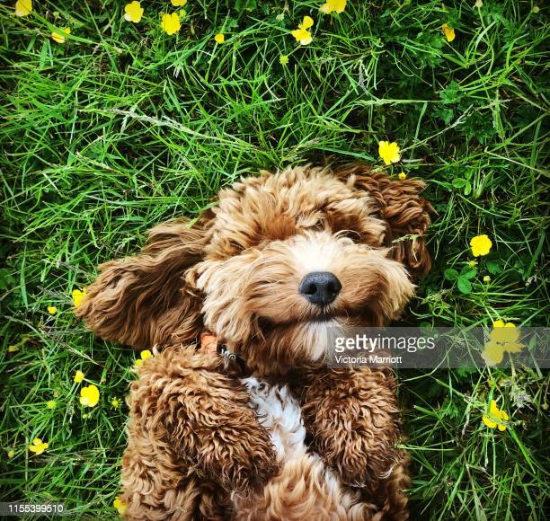 happy dog - springtime stock pictures, royalty-free photos & images