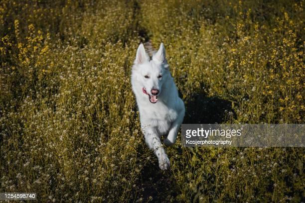happy dog - sfruttamento degli animali foto e immagini stock
