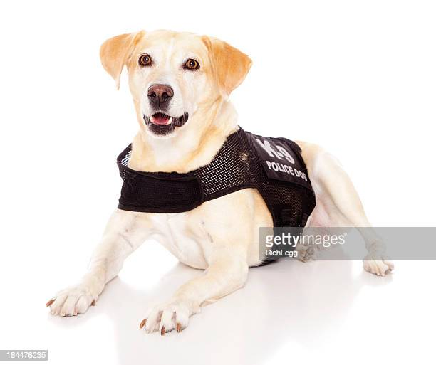 happy dog - police dog stock photos and pictures