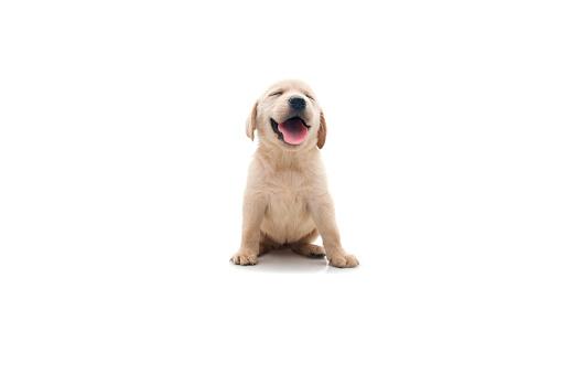 happy dog 182176638
