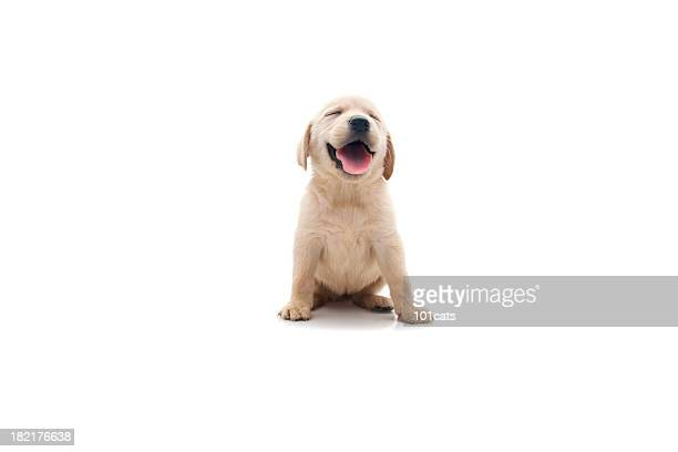 happy dog - white background stockfoto's en -beelden