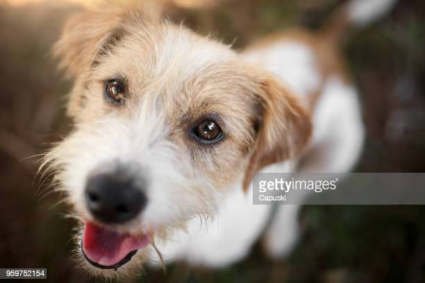 happy dog playing - mixed breed dog stock pictures, royalty-free photos & images