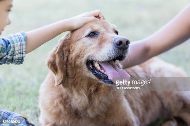 Happy dog rests after playing in the park