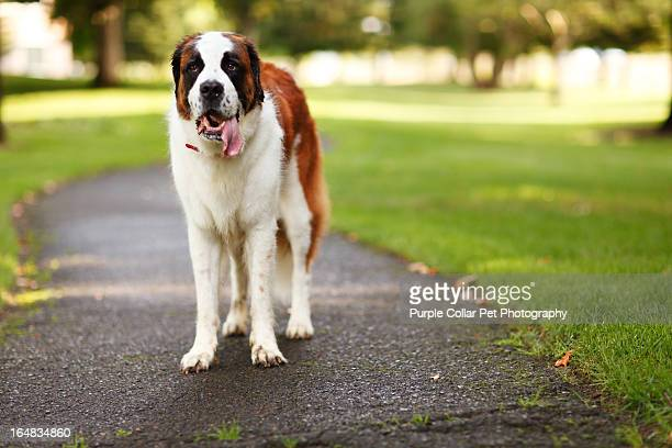 Happy Dog Standing on Park Pathway