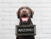 Happy dog with chalkboard with welcome text says hello welcome were open against white brick outdoor wall