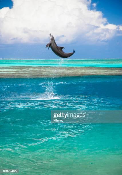 Happy Dolphin Jumping