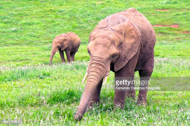 Happy elephants in a meadow