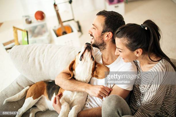 happy family - dog stock pictures, royalty-free photos & images