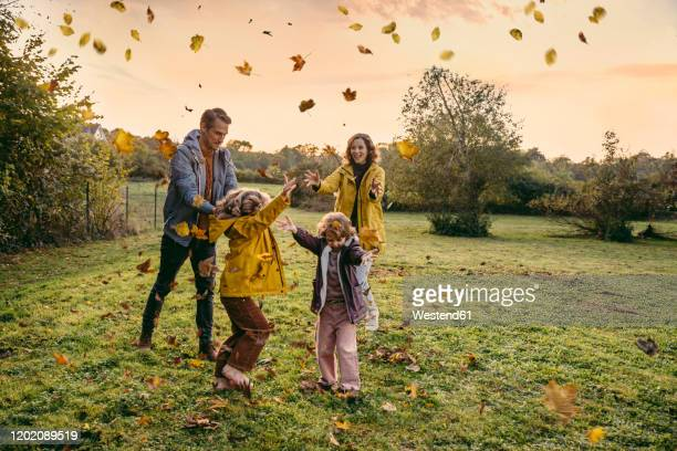 happy family playing with autumn leaves on a meadow - jahreszeit stock-fotos und bilder